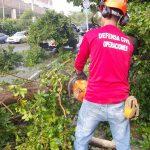 Efectos de vaguada derribó árboles en Santiago